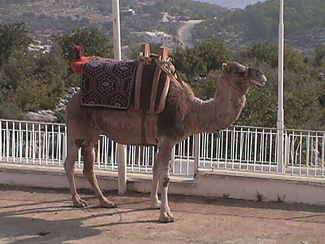 You can even ride a camel for $2.00!!!!